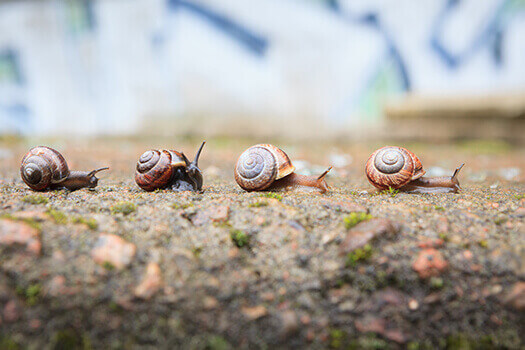 Snail Venom and Back Pain in Los Angeles, CA