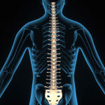 10 Incredible Facts About the Human Spine