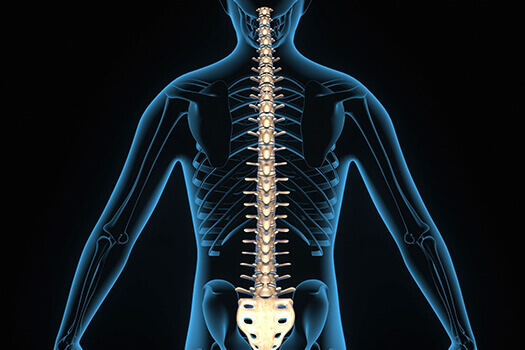 10 Fun Facts About the Human Spine