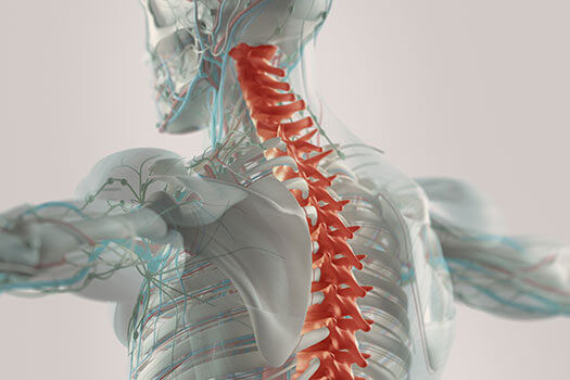 Connections Between Spine Misalignment & Vision in Los Angeles, CA